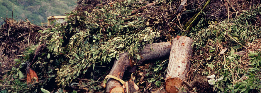 Construction Waste Disposal For Trees Shrubbery And More