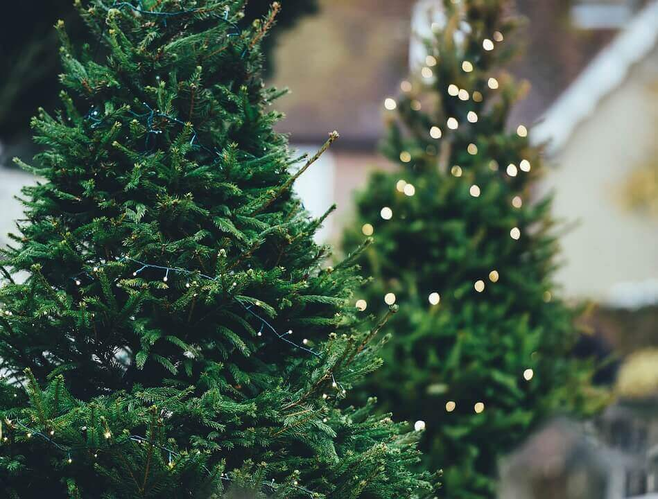 Christmas Tree Disposal & Christmas Tree Recycling